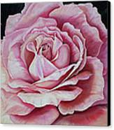 La Bella Rosa Canvas Print