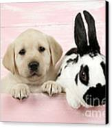 Lab Puppy And Bunny Canvas Print by John Daniels