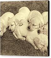 Labrador Retriever Puppies Nap Time Vintage Canvas Print by Jennie Marie Schell