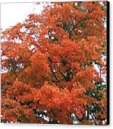 Lady Autumn - Tree Canvas Print by Margaret McDermott