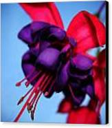 Lady Eardrops I Canvas Print by Aya Murrells