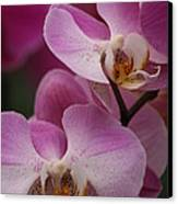 Lady Pink Orchid Canvas Print by Valia Bradshaw