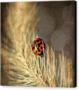 Ladybird Canvas Print by Darren Fisher