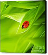 Ladybug On Leaves Canvas Print by Boon Mee