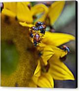 Ladybugs Close Up Canvas Print