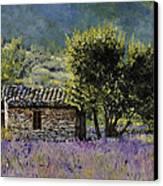Lala Vanda Canvas Print