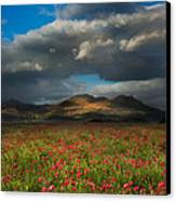 Landscape Of Poppy Fields In Front Of Mountain Range With Dramat Canvas Print