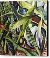 Languid Cactii Canvas Print by Lisa Boyd