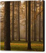 Larch Grove Canvas Print by Anne Gilbert