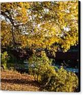 Large Spreading Oak On Banks Of West River West Cornwall Connecticut Canvas Print by Robert Ford
