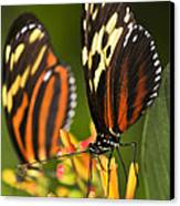 Large Tiger Butterflies Canvas Print