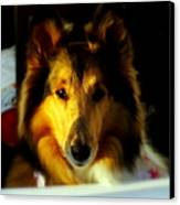Lassie Come Home Canvas Print