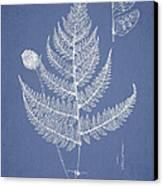 Lastrea Pulvinulifera Canvas Print by Aged Pixel