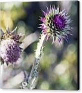 Late Bloomers Canvas Print by Dana Moyer