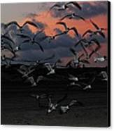 Laughing Gull Twilight Canvas Print by Candice Trimble