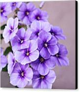 Lavender Dream Canvas Print by Cathie Tyler