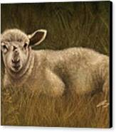 Lazy Lamb Canvas Print by Rachael Curry