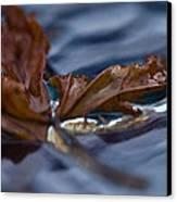 Leaf Afloat Canvas Print by Nancy Edwards