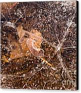 Leaf In Ice Canvas Print by Anne Gilbert