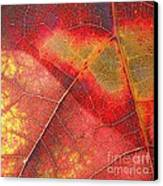 Leaf Pattern_1 Canvas Print by Halyna  Yarova