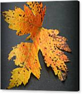 Leaf Portrait Canvas Print