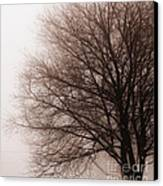Leafless Tree In Fog Canvas Print by Elena Elisseeva