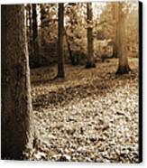 Leafy Autumn Woodland In Sepia Canvas Print