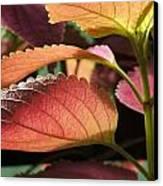 Leafy Plant Canvas Print by Nelson Watkins