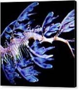 Leafy Sea Dragon Canvas Print by Paulette Thomas
