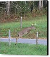 Leaping Buck In Smoky Mountains Canvas Print