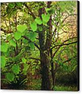 Leaves In My Hair Canvas Print by Laurie Search