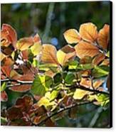 Leaves Of Light Canvas Print by Tim Rice