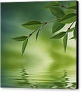 Leaves Reflecting In Water Canvas Print by Aged Pixel