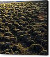 Lemmings Canvas Print by Aaron Bedell