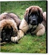 Leonberger Puppies Canvas Print