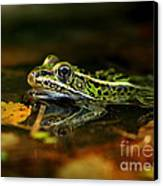 Leopard Frog Floating On Autumn Leaves Canvas Print