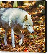 Let The Timber Wolf Live Canvas Print by John Haldane