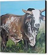 Life Between Rodeos Canvas Print