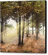 Light In The Dunes Canvas Print