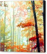 Light In The Forest Canvas Print by William Schmid