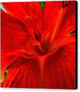 Lily Canvas Print by Mark Malitz