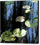 Lilly Pad Reflection Canvas Print