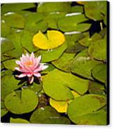 Lilly Pond Pink Canvas Print by Peter Tellone