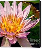 Lily And Dragon Fly Canvas Print by Nick Zelinsky