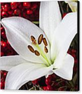 lily and Pyracantha Canvas Print by Garry Gay