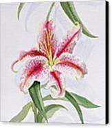 Lily Canvas Print by Izabella Godlewska de Aranda