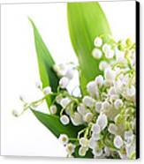 Lily Of The Valley Art Canvas Print by Boon Mee