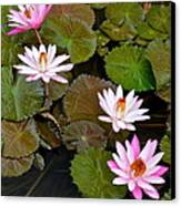 Lily Pad Haven Canvas Print