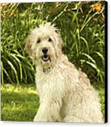 Lily The Goldendoodle With Daylilies Canvas Print