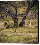 Lion In The Dog House Canvas Print